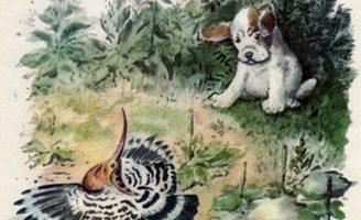 Первая охота — М. Пришвин Рассказ про маленького, хитрого и неопытного щенка