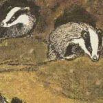 Барсучьи норы - Пришвин М.М. Рассказ про барсуков и их норки.