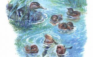 Большие и маленькие — Чарушин Е.И. Рассказ про животных и детенышей.