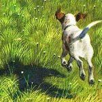 Чинк - Э. Сетон-Томпсон Рассказ про беспокойного щенка Чинка.