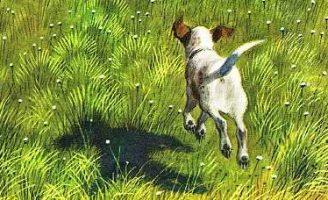 Чинк — Э. Сетон-Томпсон Рассказ про беспокойного щенка Чинка. 4.2 (6)