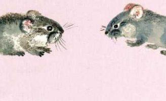 Две мышки — Чарушин Е.И. Рассказ про двух мышек: лесную и домашнюю.