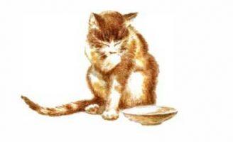 Кошка Маруська — Чарушин Е.И. Рассказ про кошку Маруську и ее хозяина.