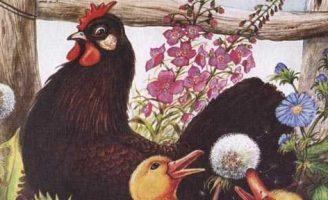 Курица на столбах — Пришвин М.М. Рассказ про курицу Пиковая дама.