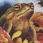 Лягушонок - Пришвин М.М. Рассказ про лягушонка ранней весной.