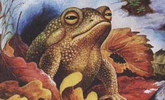 Лягушонок — Пришвин М.М. Рассказ про лягушонка ранней весной.