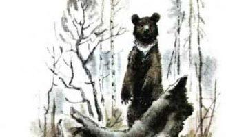 Медведь — Пришвин М.М. Рассказ как автор медведя выслеживал.