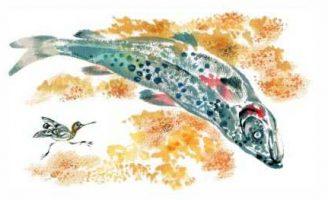 Медведь-рыбак — Чарушин Е.И. Рассказ про то, как рыба на нерест идет.