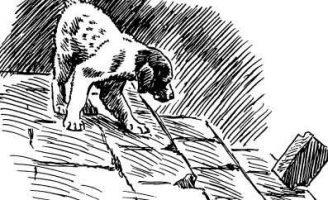 Первая стойка — Пришвин М.М. Рассказ про легавого щенка Ромула.