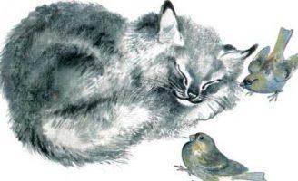 Почему Тюпа не ловит птиц — Чарушин Е.И. Рассказ про котенка Тюпу.