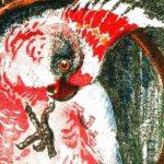 Приятель - Чарушин Е.И. Рассказ про то, как попугай ввел в заблуждение.