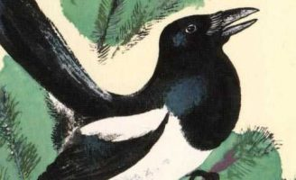 Про сороку — Чарушин Е.И. Рассказ про повадки сороки в лесу.