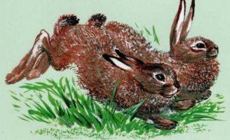 Про зайчат — Чарушин Е.И. Рассказ про то, как зайчатам кормилицу искали.