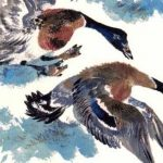 Птичье озеро - Чарушин Е.И. Рассказ про водоплавающих птиц в зоопарке.