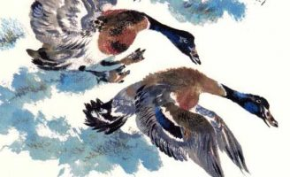 Птичье озеро — Чарушин Е.И. Рассказ про водоплавающих птиц в зоопарке.