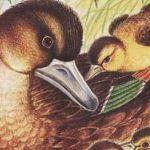 Ребята и утята - Пришвин М.М. Рассказ как утка с утятами к озеру шла.
