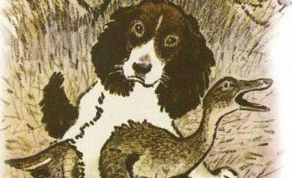 Сват — Пришвин М.М. Рассказ про охотничью собаку по имени Сват. 5 (2)