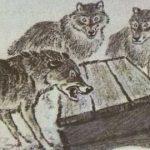 Таинственный ящик - Пришвин М.М. Рассказ про охоту на волков.