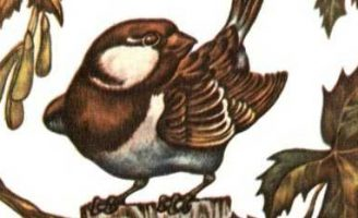 Воробей — Чарушин Е.И. Рассказ как Никита воробья учил летать. 5 (2)