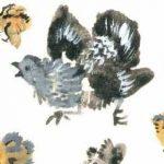 Вот они какие - Чарушин Е.И. Короткие рассказы про животных.