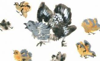 Вот они какие — Чарушин Е.И. Короткие рассказы про животных.