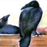 Яша - Чарушин Е.И. Рассказ про говорящего ворона Яшу.