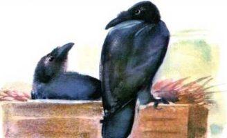 Яша — Чарушин Е.И. Рассказ про говорящего ворона Яшу.