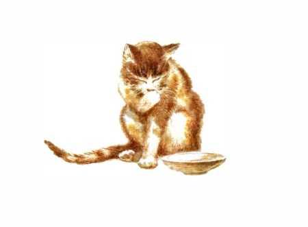 Кошка Маруська - Чарушин Е.И.