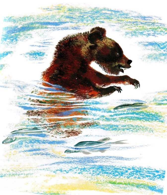 Медведь-рыбак - Чарушин Е.И.