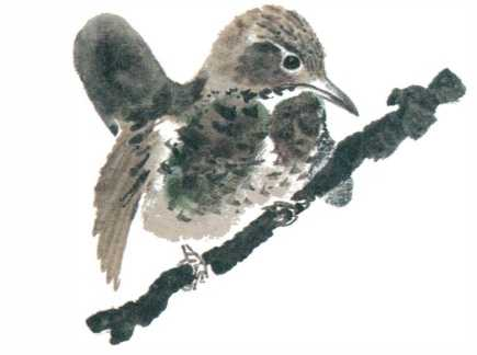 Почему Тюпа не ловит птиц - Чарушин Е.И.