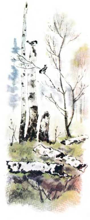 Этажи леса - Пришвин М.М.