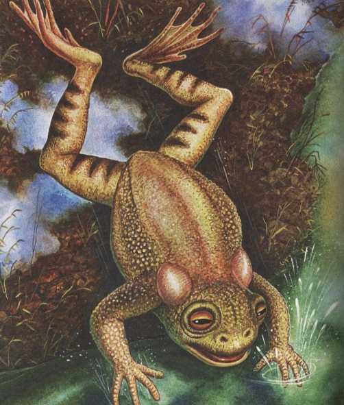 Лягушонок - Пришвин М.М.