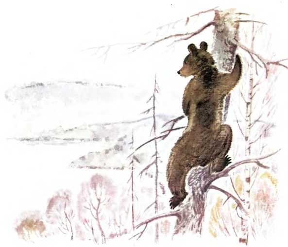 Медведь - Пришвин М.М.