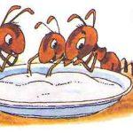 Муравей и сахар - Биссет Д. Сказка как муравьишка объелся сахара.