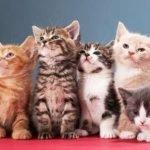 Кошачья верность - Головко А.Б. Сказка про уличных кошек.