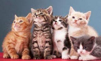 Кошачья верность — Головко А.Б. Сказка про уличных кошек.