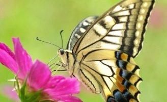 Превращение — Головко А.Б. Сказка про бабочек и гусениц. 0 (0)
