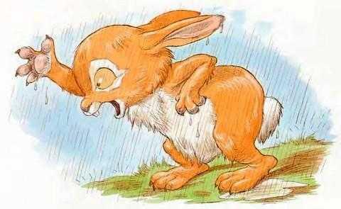Про Ёжика и Кролика: Мечты сбываются! - Стюарт П. и Риддел К.