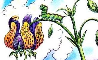Честное гусеничное — Берестов В. Сказка про гусеницу.