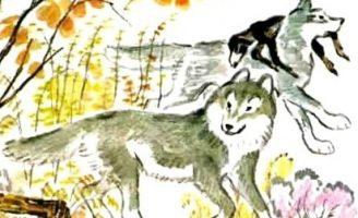 Как волки учат своих детей — Толстой Л.Н. Как волки охотились.