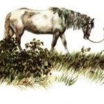 Сивый мерин - Паустовский К. Рассказ про старого мерина.
