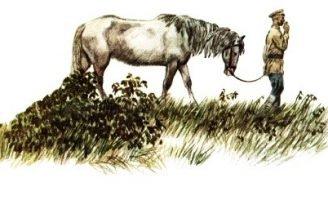 Сивый мерин — Паустовский К. Рассказ про старого мерина. 0 (0)