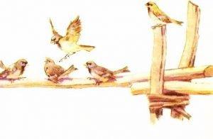 Весенняя песня - Скребицкий Г. Рассказ про весеннюю песню птиц.