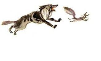 Волк и белка — Толстой Л.Н. Басня про веселую белку и скучного волка.