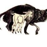 Волк и ягненок - Толстой Л.Н. Басня Эзопа в перессказе Толстого Л.Н.