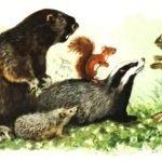 Всяк по-своему - Скребицкий Г. Как звери в лесу зимуют.