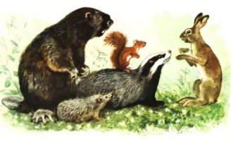 Всяк по-своему — Скребицкий Г. Как звери в лесу зимуют.