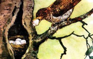 Хитрая птица - Скребицкий Г. Рассказ про кукушку и гнездо.