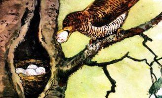 Хитрая птица — Скребицкий Г. Рассказ про кукушку и гнездо.