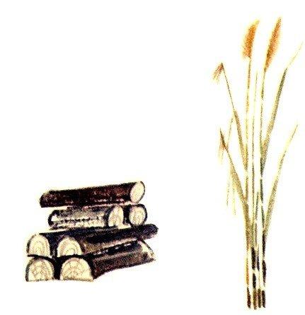 Камыш и маслина - Толстой Л.Н.